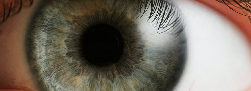 Blue-yellow color vision predicts your cognition!