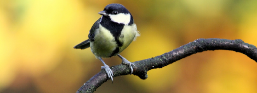 Are Bigger Brains Better? A search in Bird Brains