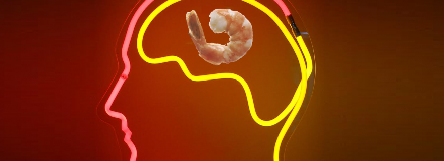 How shrimps can improve your memory