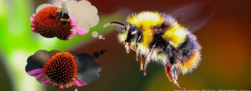 Social BEEhaviour: how bumblebees overpower Pavlov