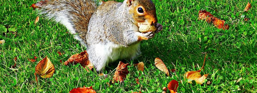Eat nuts to not go nuts!