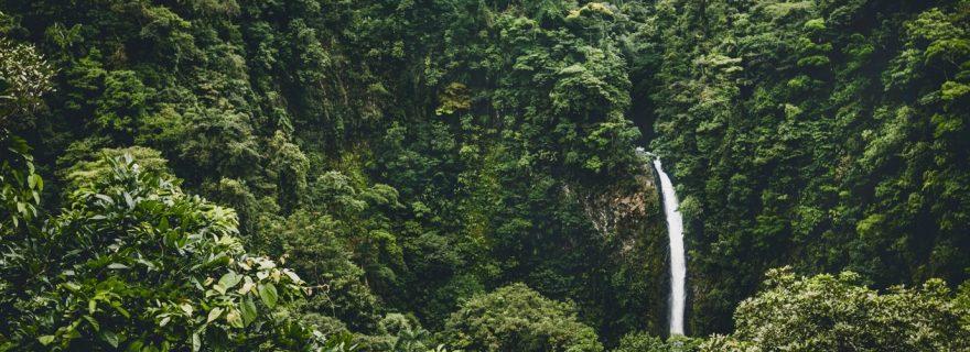 ASMR: A Sensory Refuge in the Modern Jungle
