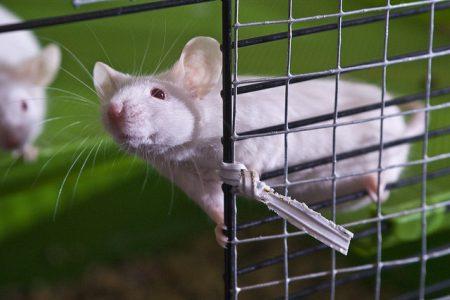 Can a mouse use a joystick?