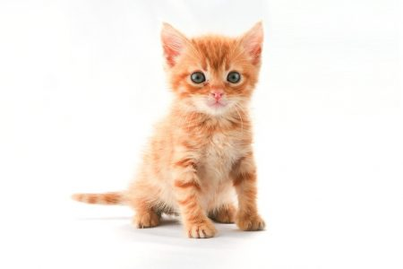 The power of kitten pictures: Positive pictures make task switching easier
