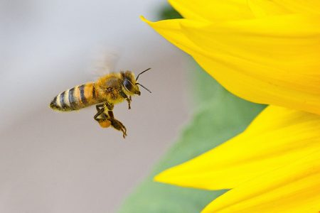 The Emotional Bee: Honey Badgers, Cocaine and Dancing Bees