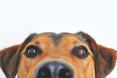 How a staring contest with your dog can improve your human-dog-bond