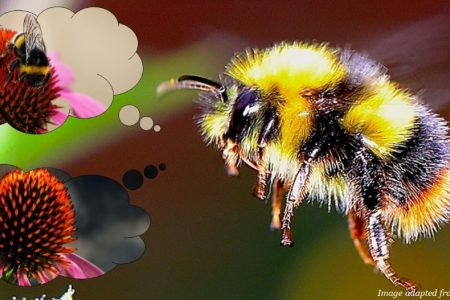 Social BEEhaviour: how bumblebees overpower Pavlov